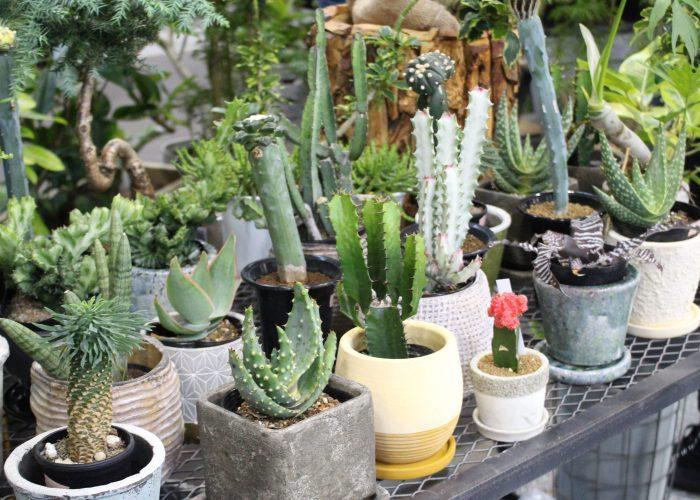 お庭づくりを楽しめるイベント!エクステリア&ガーデンフェア名古屋2017をレポート!@ポートメッセ名古屋
